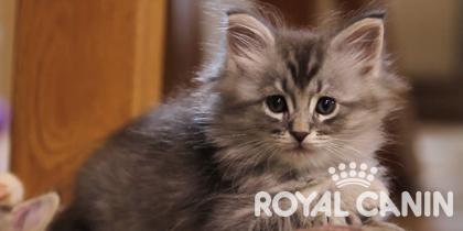 Het beste voor je kitten – Royal Canin