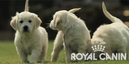 Goede voeding voor je pup – Royal Canin