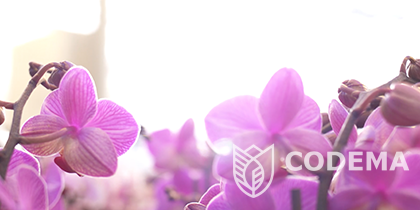 Codema – OK Plant